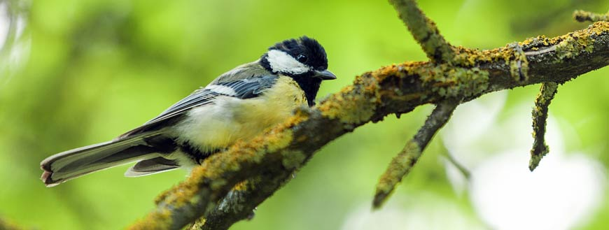 Birdwatching in Chester, NJ