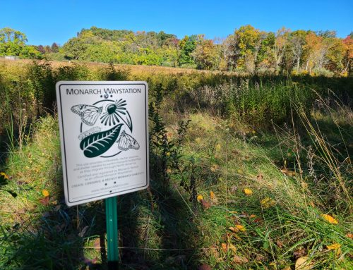 Monarch Butterfly Waystation Designated at Highlands Ridge Park in Chester